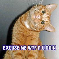 Cat says WTF?